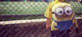 Torneo-Ultras-Frosinone-2016-11